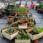 City farming eller urban gardening